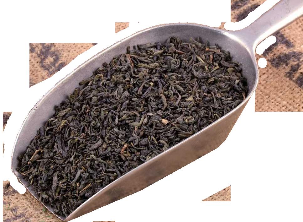 الشاي الأخضر – إعداد وترجمة المهندسة الغذائية: سلطانة محمد