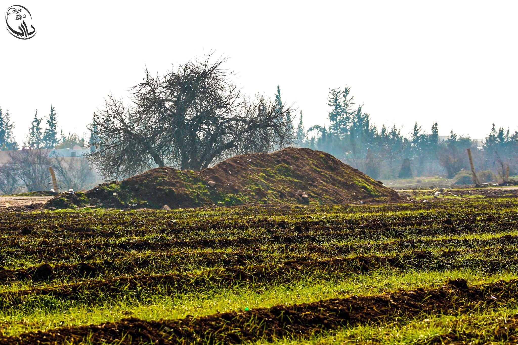 مشروع زراعة القمح في داريا
