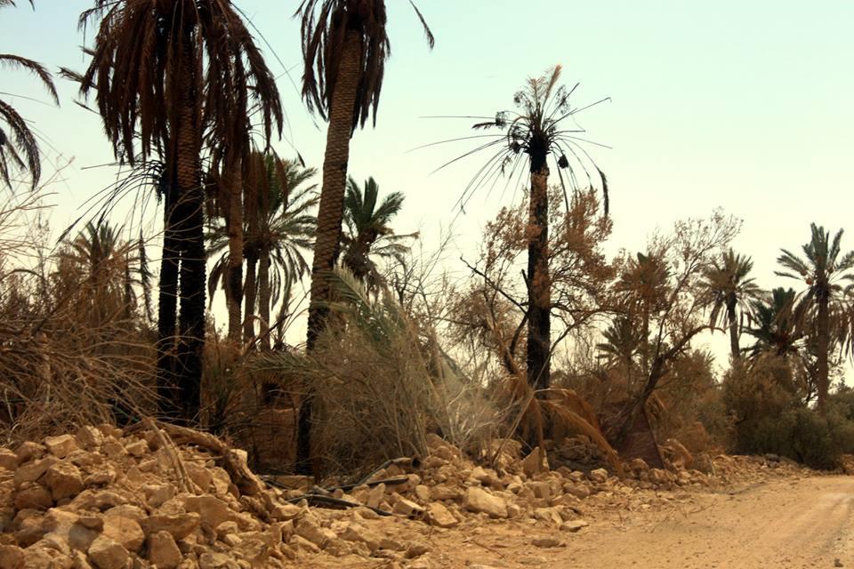 بعض آثار التخريب في أشجار الواحة التدمرية