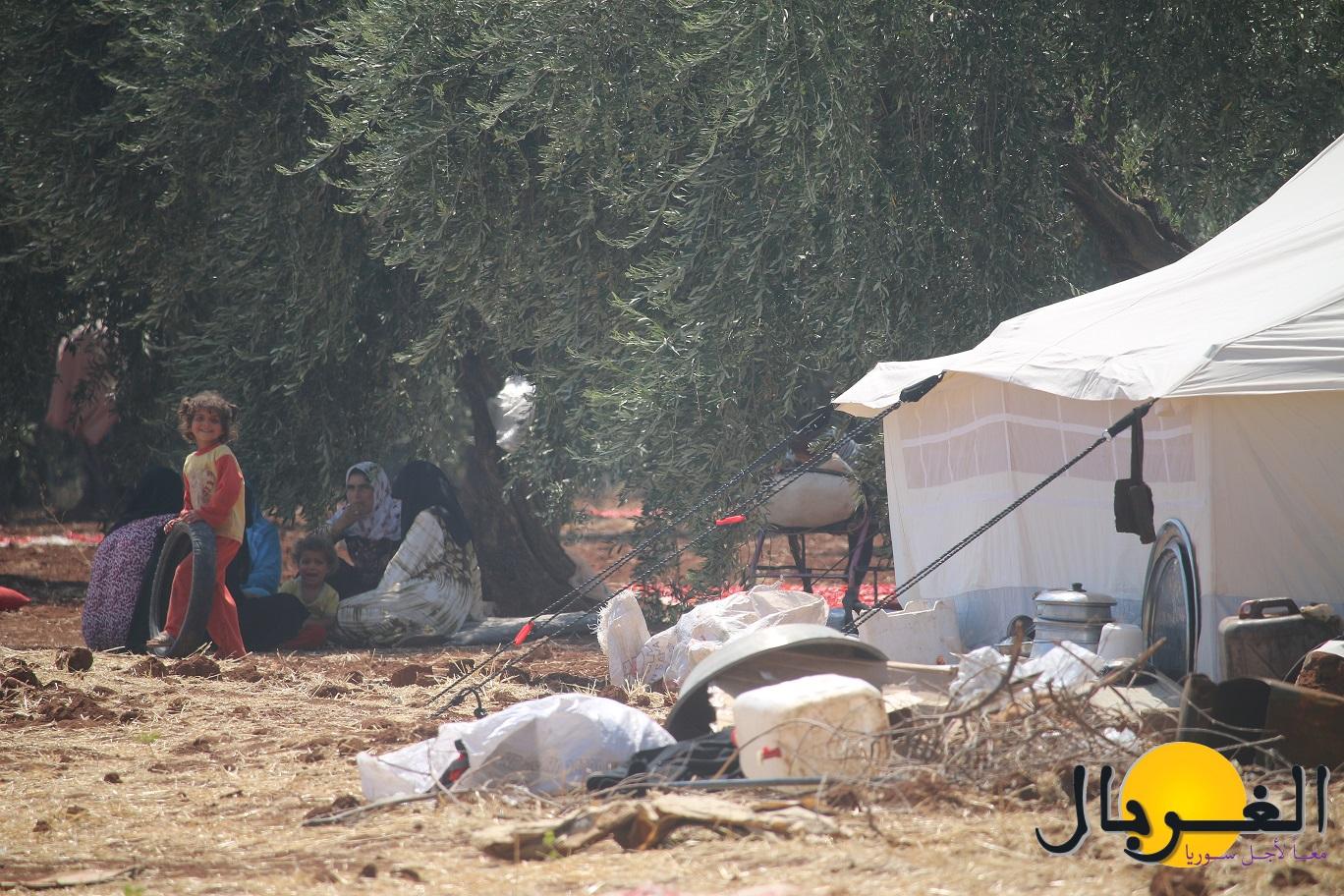 مخيم بين كروم كفركلبين (2)