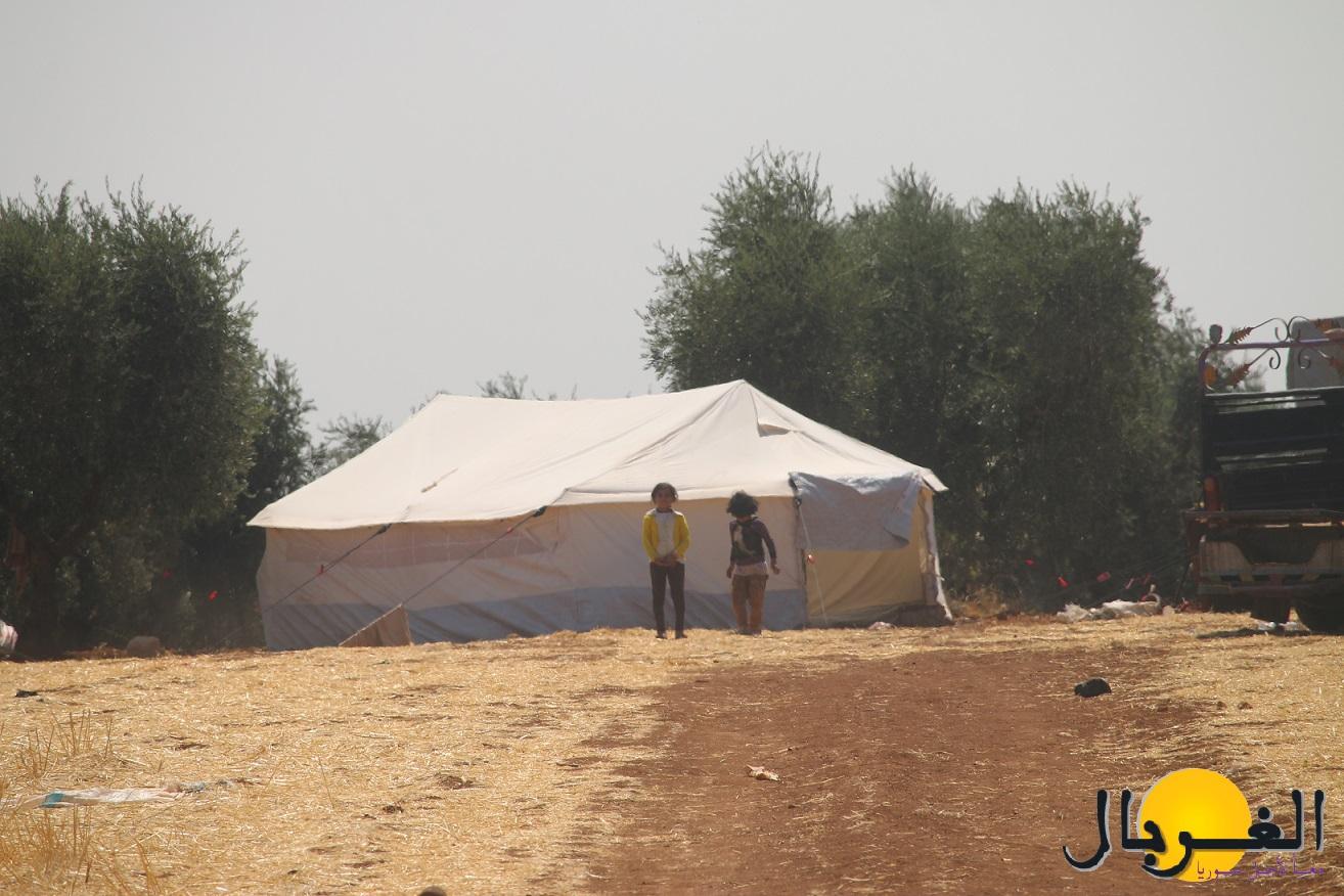 مخيم بين كروم كفركلبين (3)